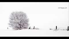 My Nemesis (ICT_photo) Tags: winter white snow tree fence frost guelph highkey nemesis ontaio ictphoto ianthomasguelphontario