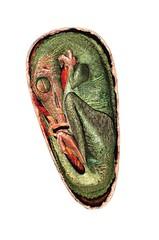 troodon egg
