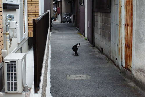 Today's Cat@20090311