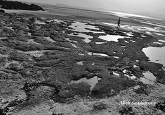Naaz Island (Alieh) Tags: bw water walking persian iran persia iranian ایران persiangulf qeshmisland ایرانی aliehs alieh ایرانیان پرشیا سیاهوسفید عالیه سعادتپور upcoming:event=2112901 naazisland