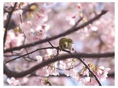 Cherry & Bird 090319 #04
