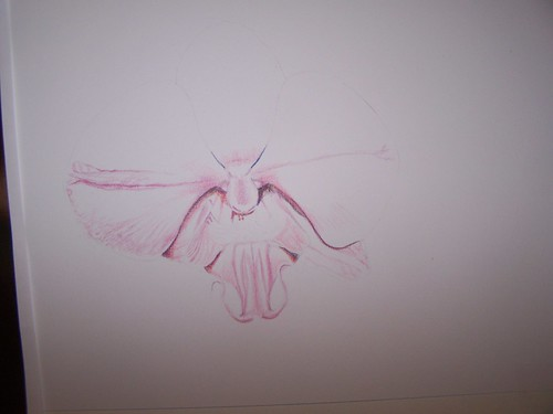orchid colored pencil 1