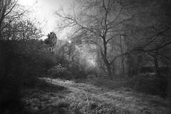 Path to Drown Boy Pond (Ian Hayhurst) Tags: trees ir path spooky infrared canonef1635mmf28liiusm wanderinggypsies