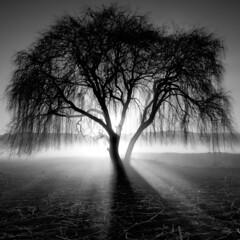 Arbol Luminoso (Moises Levy L) Tags: idream fivestarsgallery thesecretlifeoftrees —obramaestra—