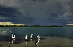 Storm Boy (ImageBud) Tags: cloud lake storm pelicans clouds canon newcastle australia lightning thunder hdr lakemacquarie cs4 40d blacksmithsbeach camdub