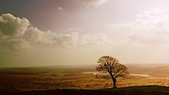 lone tree landscape (Dan Morgan1) Tags: sky tree clouds landscape nikon view peakdistrict lakes valley fields lone 169 d80
