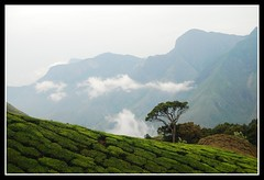 Misty Mountain High (Nithin Chandra G S) Tags: sky india mist mountain mountains tree clouds nikon tea roadtrip kerala clear thekkady estates munnar teaestates d80 nikond80 toppoint