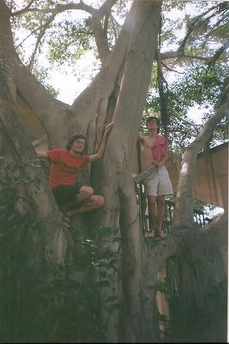 cocomo's banyan