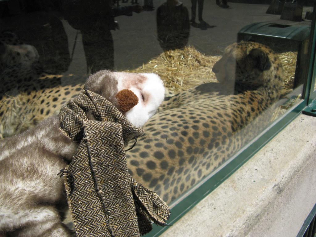 Das Wiesel bei den Geparden