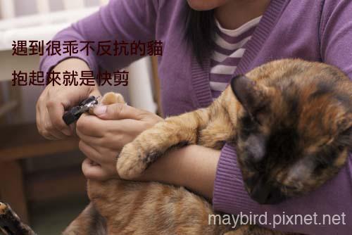 DSC_0304 copy.jpg