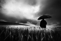 (Effe.Effe) Tags: bw monochrome rain clouds umbrella lluvia cornfield nuvole mood grain pluie surreal bn lonely nuage pioggia senigallia ombrello sigma1020 bwdreams campodigrano