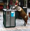 Pig, Rundle Street
