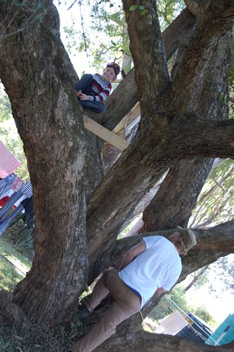 working on the tree house