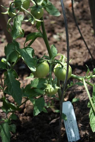 Garden progress May 005.JPG