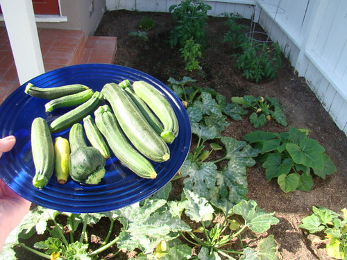 Organic Gardening Resources On The Net