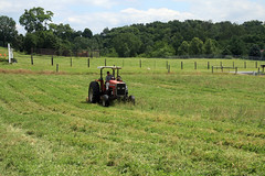 Mowing the pasture