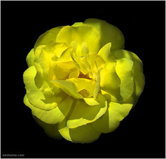 Yellow Flower (Ben Heine) Tags: travel light wild sun nature fleur jaune garden season relax landscape photography countryside petals stem poem photographie perfume time nikond70 earth geometry lumire details jardin peaceful philosophy yellowflower harmony smell memory poet planet terre spirituality conceptual paysage eternity gentle bloem sauvage parfum bouton digitalshot petersquinn benheine colourartaward flagrance excellentsflowers excellentsflower fullcolours vosplusbellesphotos hubertlebizay hubzay flickrunited odeurrose pulpeux