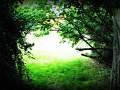 Step Into The Light (gonisj) Tags: trees plants overgrown backyard ivy