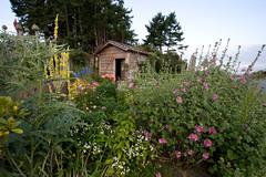 An abundance of flowers (Frank Gab&Tor) Tags: flowers garden britishcolumbia pacificnorthwest gabriolaisland gulfislands flowerscolors