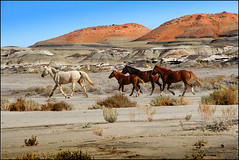On the run (Dave Arnold Photo) Tags: pictures horses horse usa newmexico southwest rock canon us photo cowboy desert image photos arnold picture shapes dry pic images photograph american western sw hoodoo badlands wilderness nm moonscape wildhorses farmington americawest southwestusa bisti bistibadlands swusa sanjuancounty westernus davearnold greatimage runninghorses bistiwilderness canonequipment canonphotographer nmex newmexicobadlands westernamerica davearnoldphoto davearnoldphotocom sanjuanbadlands