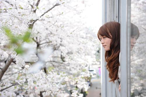 sakura - style A