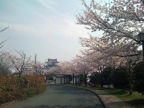 関宿城と桜