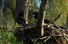 08 (triggermike) Tags: eaglesnest eagles pembrokepines