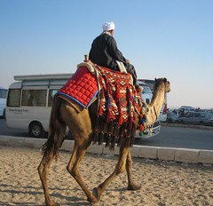 IMG_2226 man on camel 1