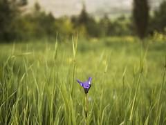 Bokeh (Sherwan) Tags: flowers flower macro nature photoshop nikon flickr raw dof village bokeh quality iraq pixels erbil kurdistan kurd sherwan kore d90 irbil hawler krg hewlr salaheddin nikond90    nikond90club
