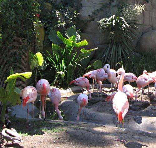 Flamingos Santa Barbara Zoo