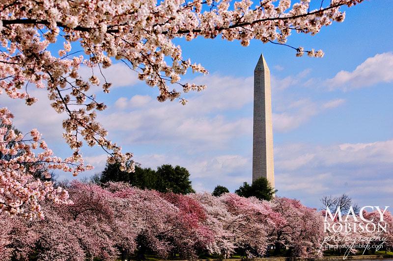 Cherry Blossom Festival - 7