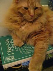 Jasper and the gardening books
