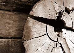 Timber (ssoross1) Tags: sepia timber catherinehillbay