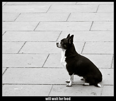will wait for food (PhyreWorX) Tags: barcelona blackandwhite bw dog white black dogs canon spain waiting flickr barca border ground canine catalonia hund adobe plugin jeffrey schwarzweiss weiss schwarz hunde friedl spanien lightroom boden schwaz wartet katalonien imagemagick tle katalanien 40d mogrify phyrephox tlen