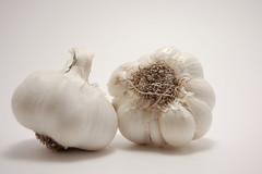 Garlic (// Between the Lines //) Tags: white kitchen whitebackground garlic whiteonwhite wolvesworldinwhite