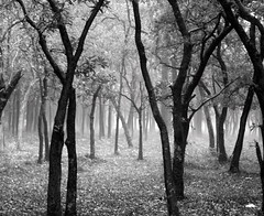 Forest mist and hailstorm in the summer...proof of climate change...! (ankita asthana) Tags: summer india white mist black forest photography nikon 5 institute research coolpix change proof climate nit megapixel dehradun fri nagpur hailstorm ankita l10 asthana blackwhitephotos