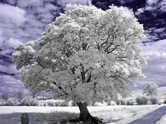 on the way to kennet barrow (Ren A) Tags: tree canon river ir swindon infrared modified converted g3