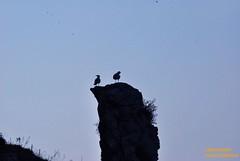 (Rossana Arcoleo) Tags: sea mer mar nikon mare seagull natura sicily palermo sicilia rossana gabbiano d60 sicile palerme capozafferano arcoleo rossana02 rossanaarcoleo