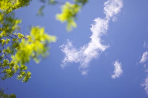 May Sky