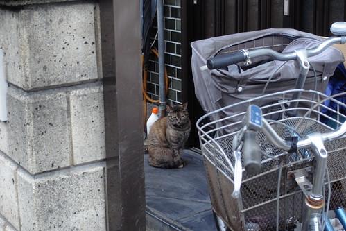 Today's Cat@20090621