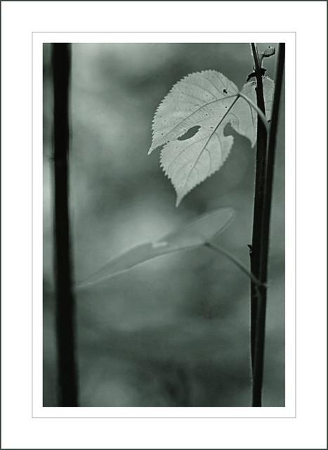 the leaf...