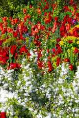 Red, White, Blue, Yellow & Green at Great Dixter! (antonychammond) Tags: uk flowers blue red england white green yellow garden tulips britain border eastsussex christopherlloyd greatdixter fantasticflower abigfave saveearth flickraward firsttheearth theunforgettablepictures colourartaward natureselegantshots awesomeblossoms colorfullaward flickrflorescloseupmacros