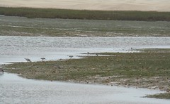 Laguna de Naila-Parque Natural de Knenifiss-Sahara 46 (Rafael Gomez - http://micamara.es) Tags: parque lagune sahara nature fauna marina de la flora desert natural reserve paisaje aves lagoon desierto laguna nacional naturelle reserva naila  rserve   migratorias  dunar  khenifiss