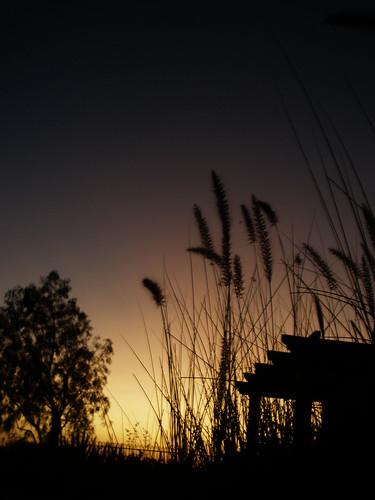 Backyard. Orange County. Summer 2009.