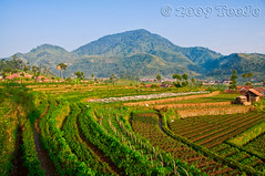 Products of agriculture and plantation (T Ξ Ξ J Ξ) Tags: indonesia bandung westjava nikkor d300 ciwidey teeje theunforgettablepictures