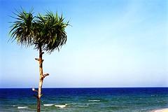 Random : Life's A Beach (W  M Soo) Tags: beach palm nikonf100 malaysia terengganu cpl lifesabeach fujisuperia200 nikkor50mmf18d hoyacircularpolarizer wansoo earthasia wmsoo mercang thebeachesofterengganu seducingtuanmajdi