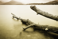 Fallen (Samantha Nicol Art Photography) Tags: longexposure tree art water sepia mono bay scotland log nikon hills filter nd samantha scape toned lochlomond nicol balmaha 10x milarrochy
