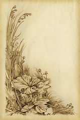 Various herbs (Yaroslav Gerzhedovich) Tags: bw art texture moleskine nature illustration rural pencil photoshop paper sketch blackwhite drawing grunge picture drawings japanesealbum yaroslavgerzhedovich