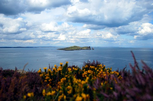 island off the coast of howth with wildflowers in the foreground
