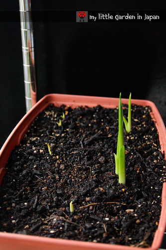 seedlings-and-sproutings-3